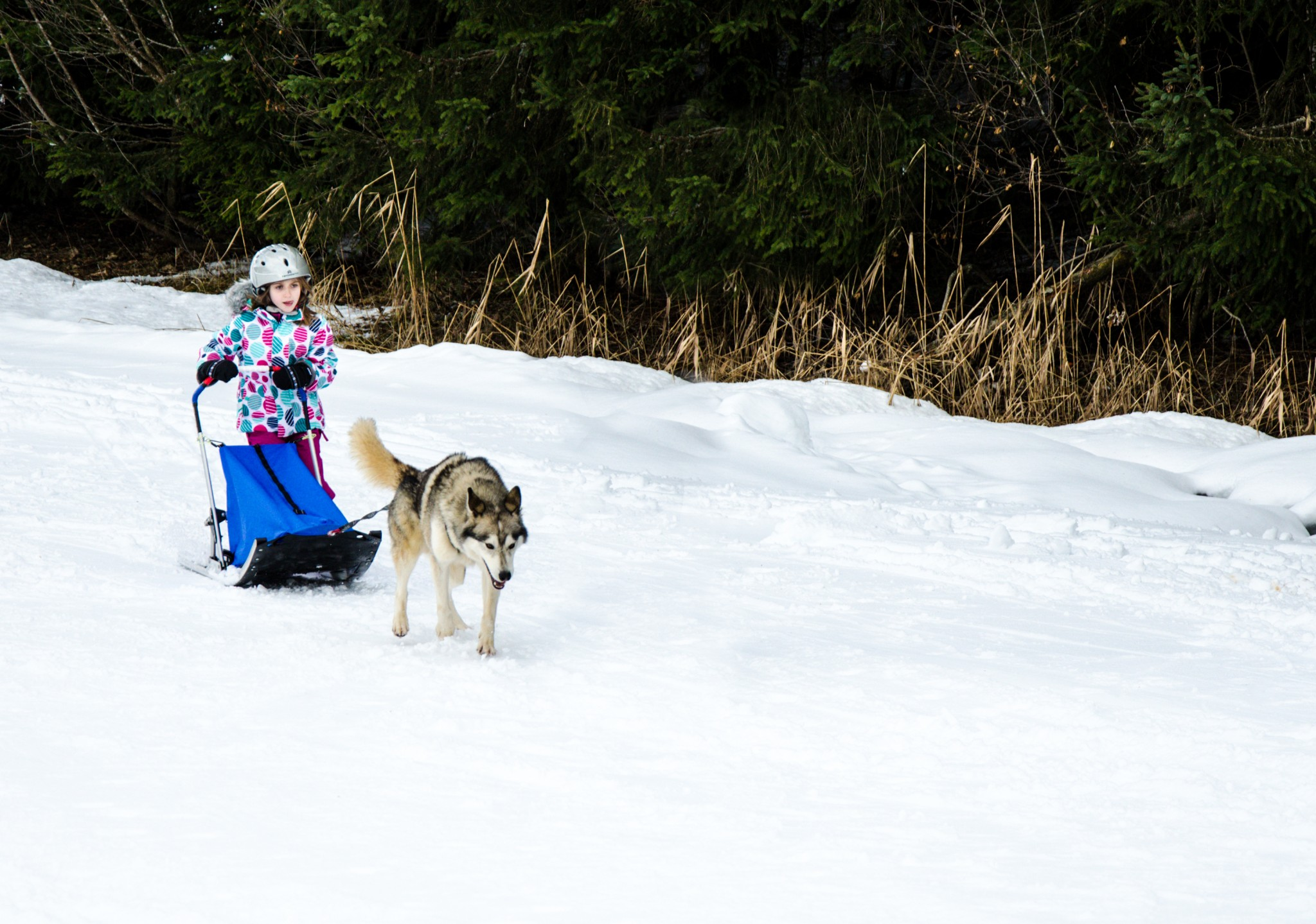 Dog Sledding for 3 Year Olds © Office de Tourisme du Val d'Arly Mont-Blanc (2)