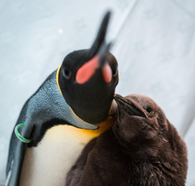 Penguin (17 of 17)